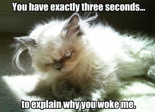 "This may not be ""the"" Grumpy Cat, but it is certainly grumpy   https://sphotos-b.xx.fbcdn.net/hphotos-ash4/65285_10150296514629945_1872846704_n.jpg"
