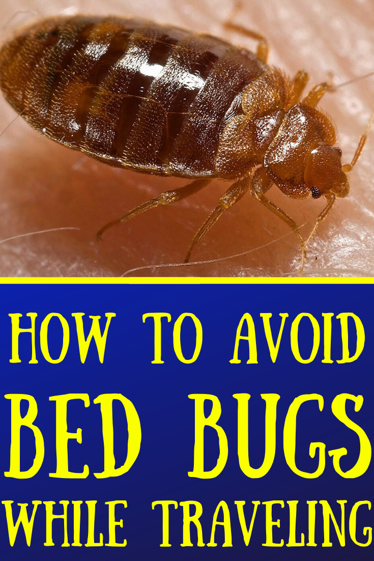 6ce50fc2f133ef352c15d8aae55f6de4 - How To Get Rid Of Bed Bugs While Backpacking