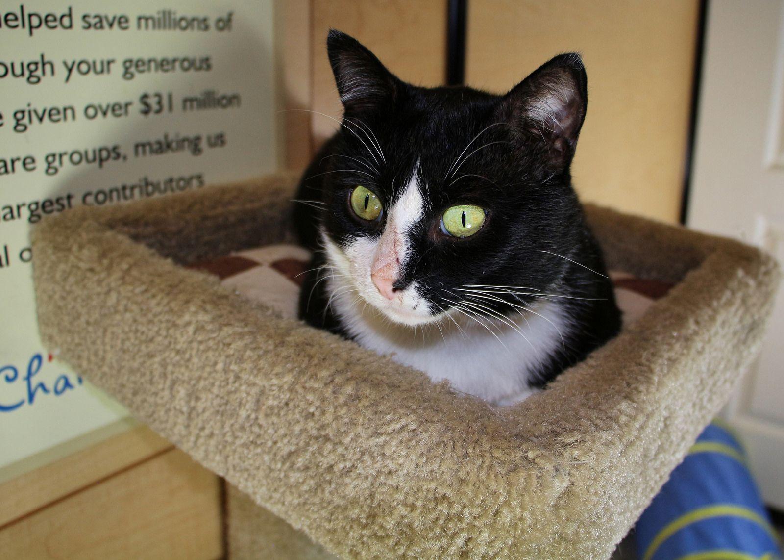 Dartmouth Scat Petsmart Adoption Centre July 4 2016 Cat Adoption Adoption Center Adoption