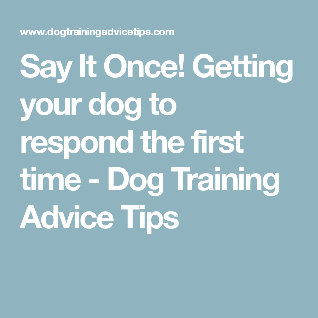 say it once dog training