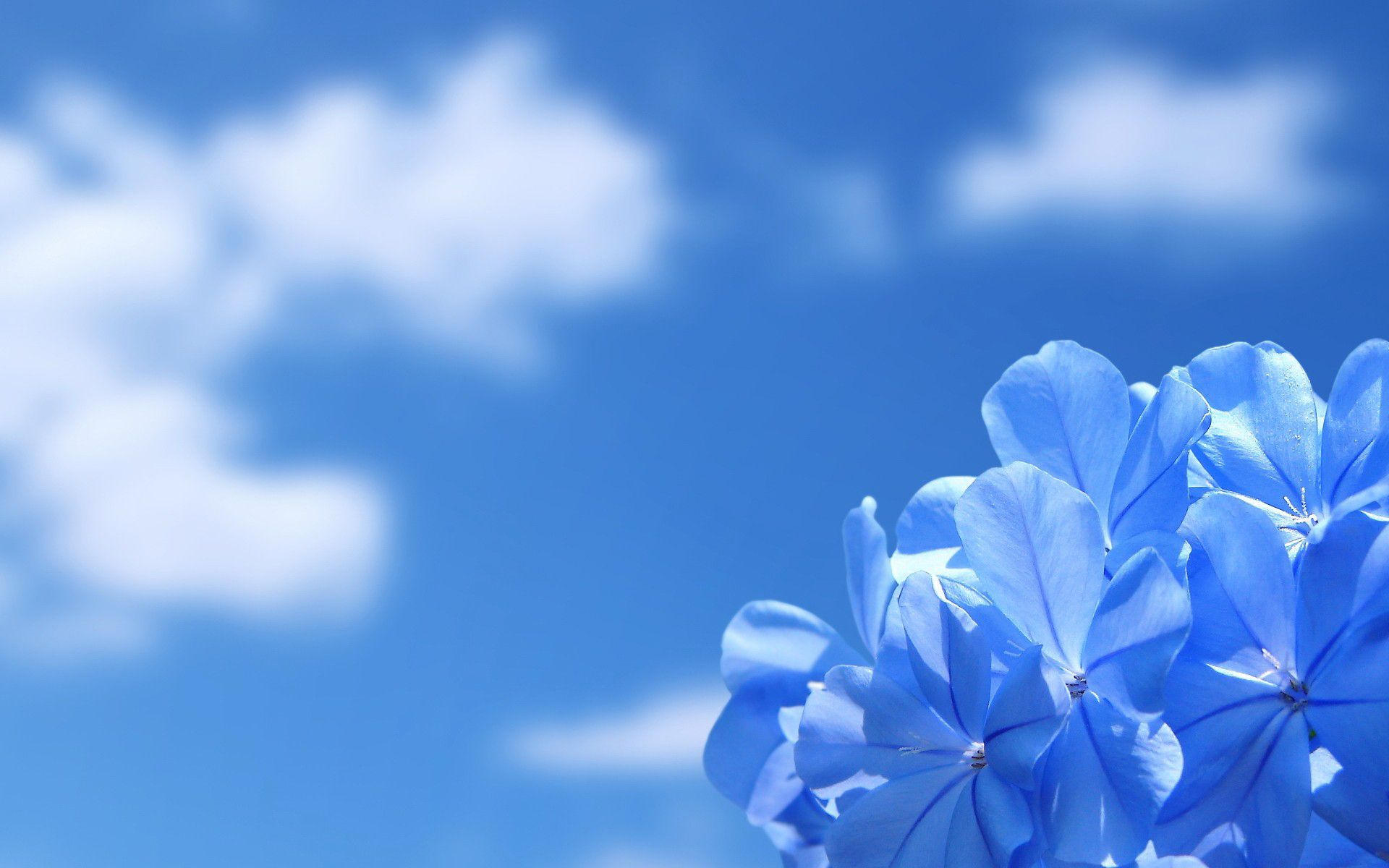 Background Wallpapers Blue Flower Pictures Blue Flower