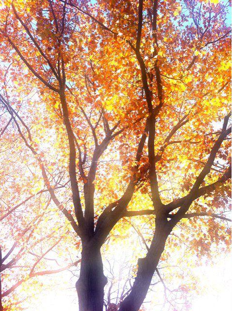 Outono mágico em NYC.