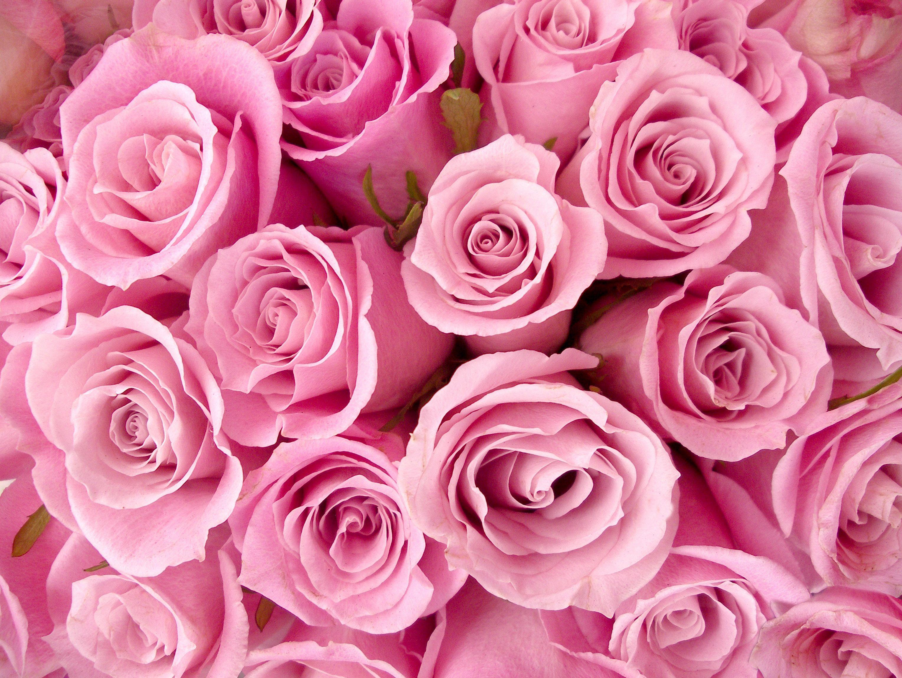 Цветы блестят фото