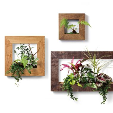 Cornici x piante