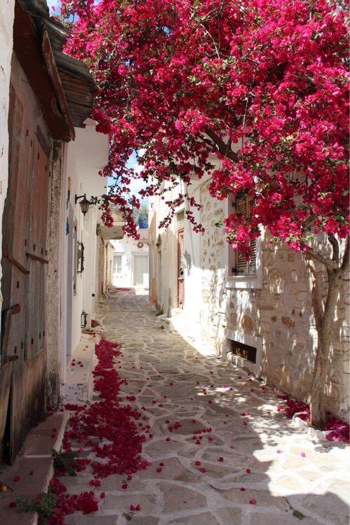 Imagen de travel, beautiful, and flowers