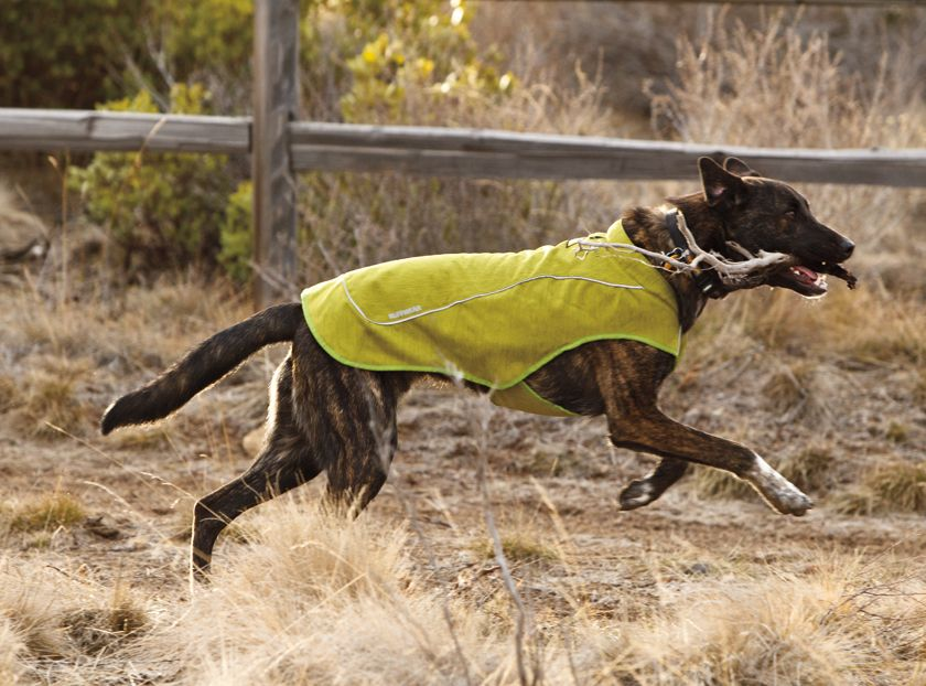 Ruffwear K-9 Overcoat™ Utility Dog Jacket
