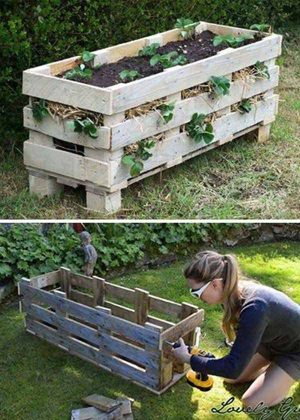 Its gardening season Are you ready Here are some of my favorite hacks for your garden that I hadnt heard of before For example use a lemon or egg shells as a perfect mini... 24 Incredibly Clever Gardening Tricks For Your Garden It's gardening season! Are you ready? Here are some of my favorite hacks for your garden that I hadn't heard of before. For example: use a lemon or egg shells as a perfect minimalist medium of growing seedlings; make a strawberry planter out of a single wooden pallet; prevent animals from get