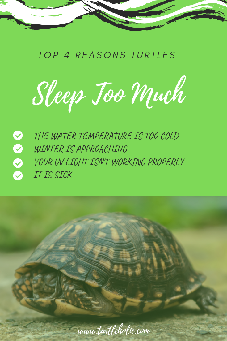 Turtleholic Clear Simplified How To Guides For Pet Turtle Owners Turtle Care Pet Turtle Turtle