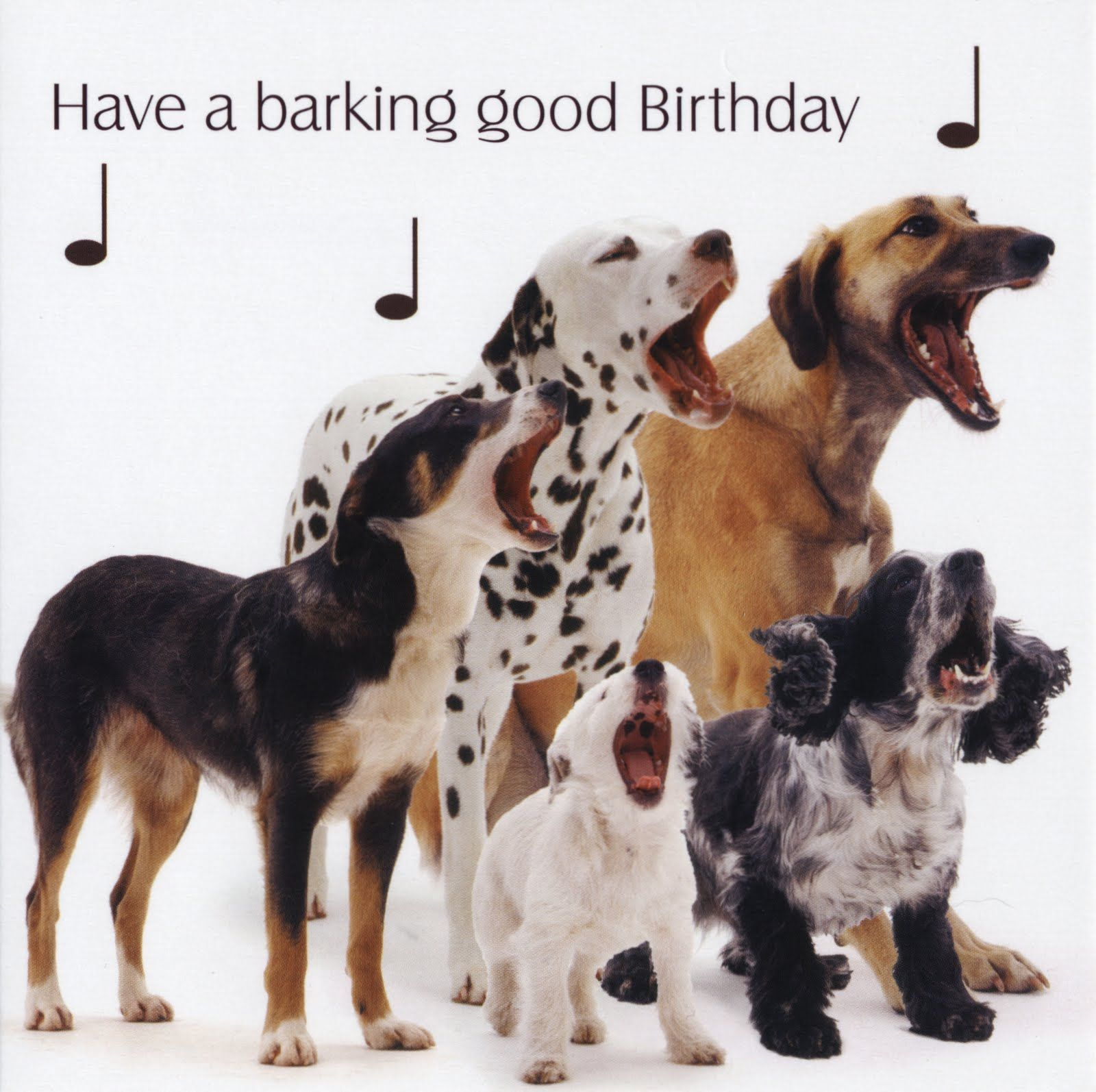 Dog birthday wishes google search doggy birthday wishes dog birthday wishes google search kristyandbryce Choice Image