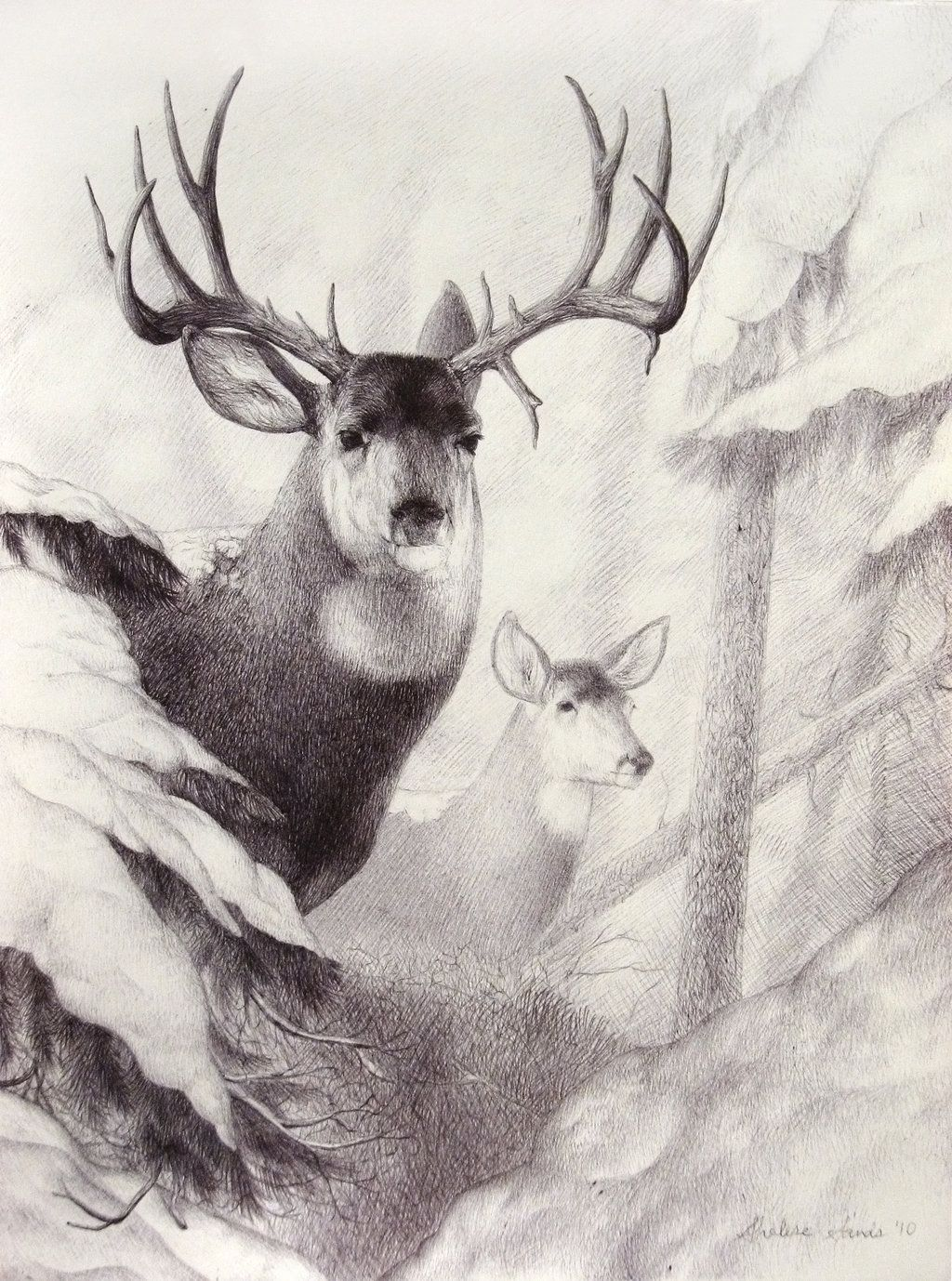 Big Mulie Deviantart Nature Deer Drawing Drawings