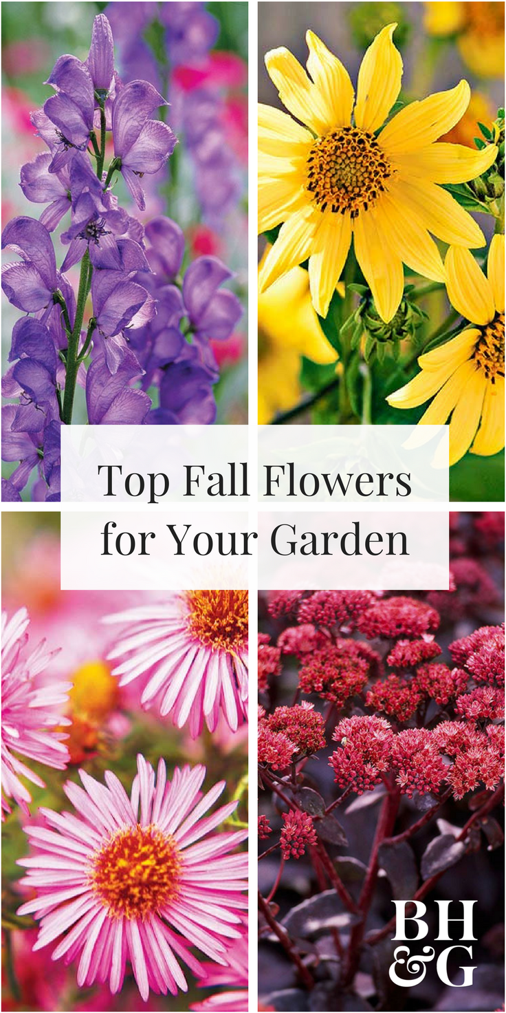 8 Fall Blooming Native Plants We Love With Images Fall