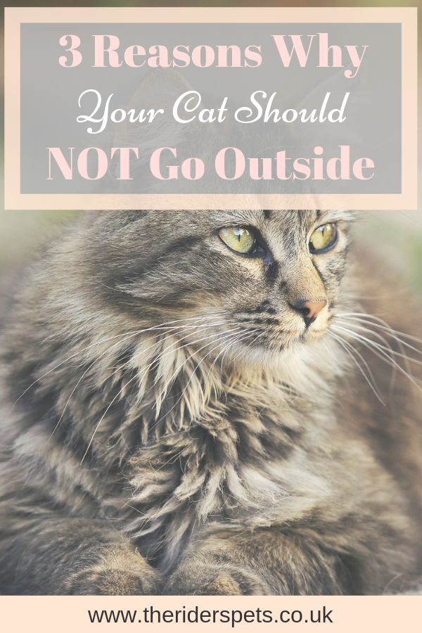 3 Reasons Why Your Cat Should Not Be Allowed Outside Cats Cat Diseases Cat Care