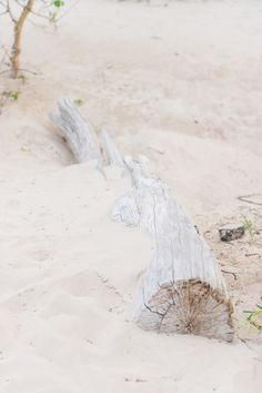 Driftwood and Sand | Izabela Rachwal Photography
