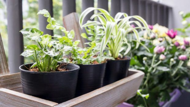 Cómo hacer una jardinera de madera Noticias Pinterest - como hacer una jardinera
