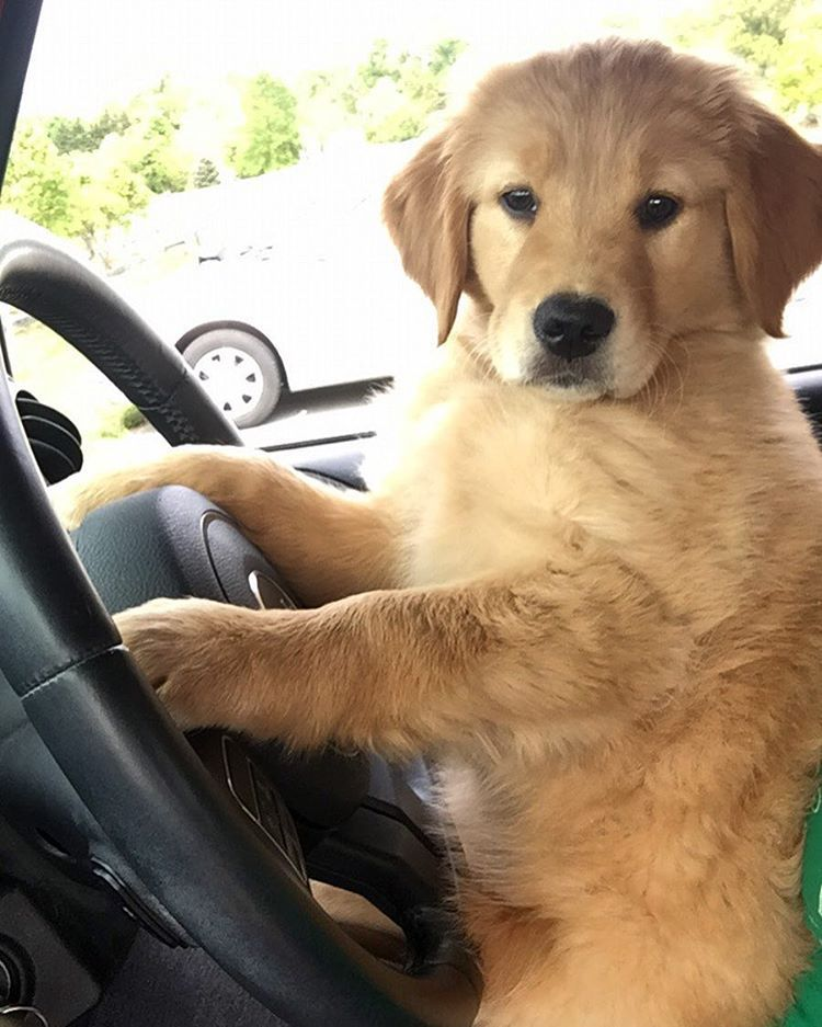 Don T Bark And Drive I Love Dogs Cute Puppies Cute Dogs