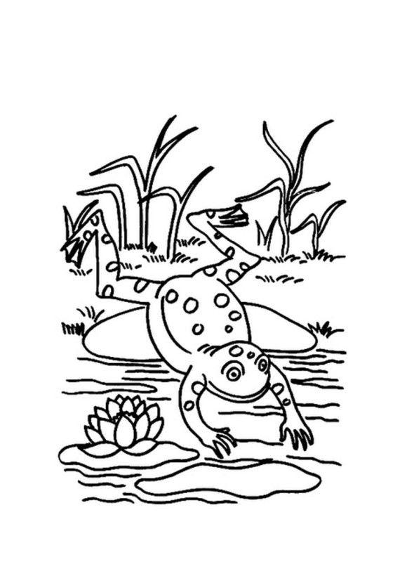 Jumping Frog Coloring Page Taken
