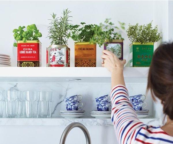 Kitchen herbs in old tea tins.