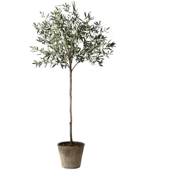 Sage Co Tall Green Olive Tree With Pot 680 Cny Liked On