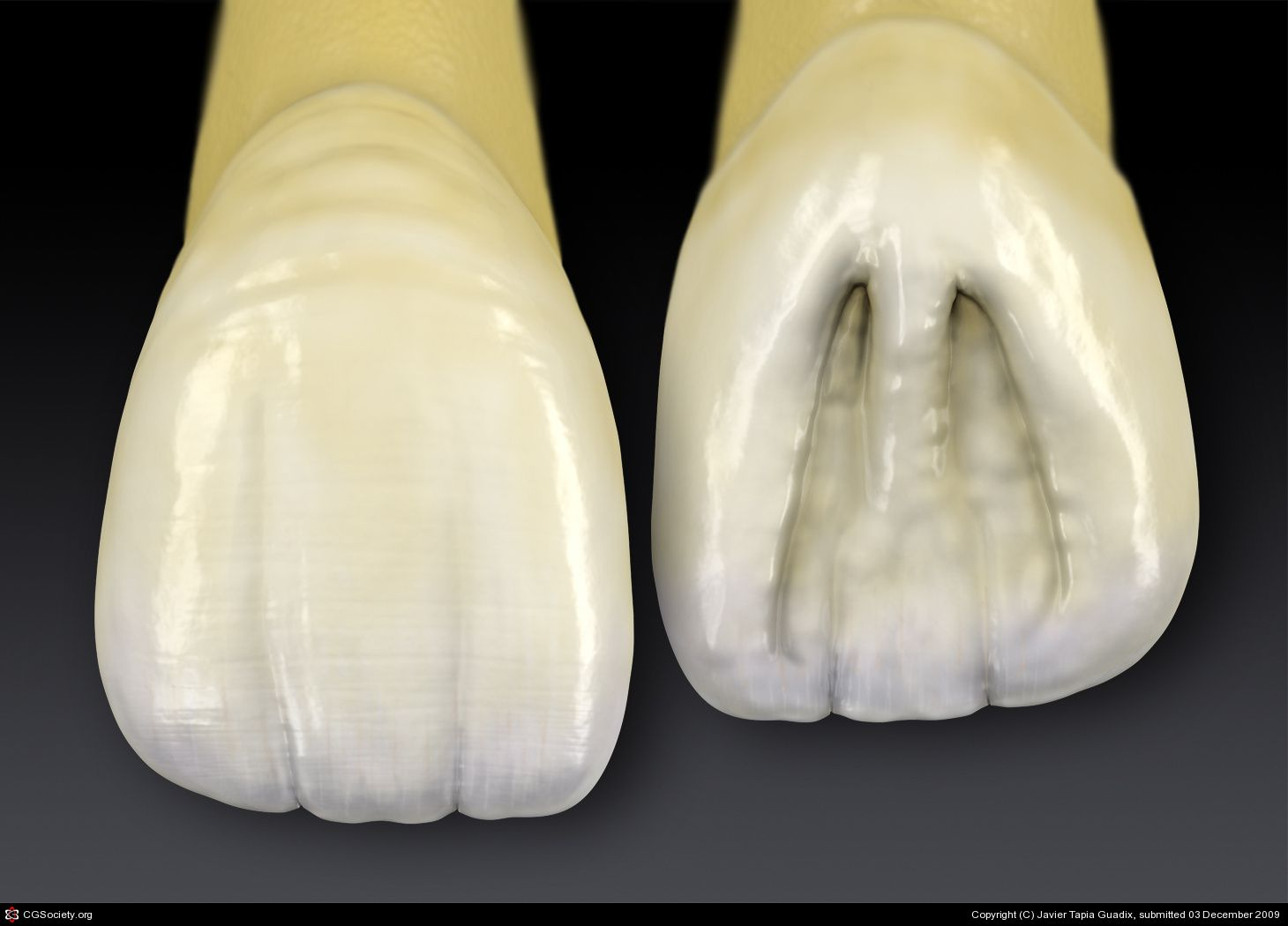 Central Incisor by Javier Tapia Guadix | 3D | CGSociety | teeth ...