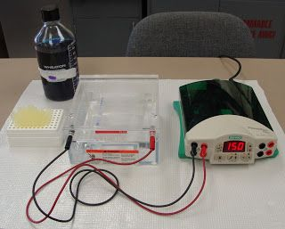 Multiple Choice Questions on Electrophoresis | Biology Multiple