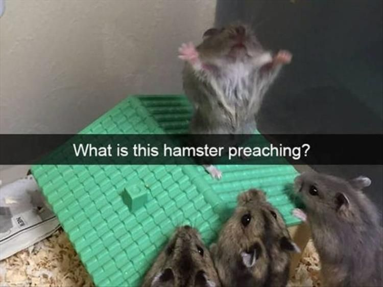 Latest Funny Pets Funny Animal Memes Of The Day 25 Pics Funny Animal Memes Of The Day 25 Pics