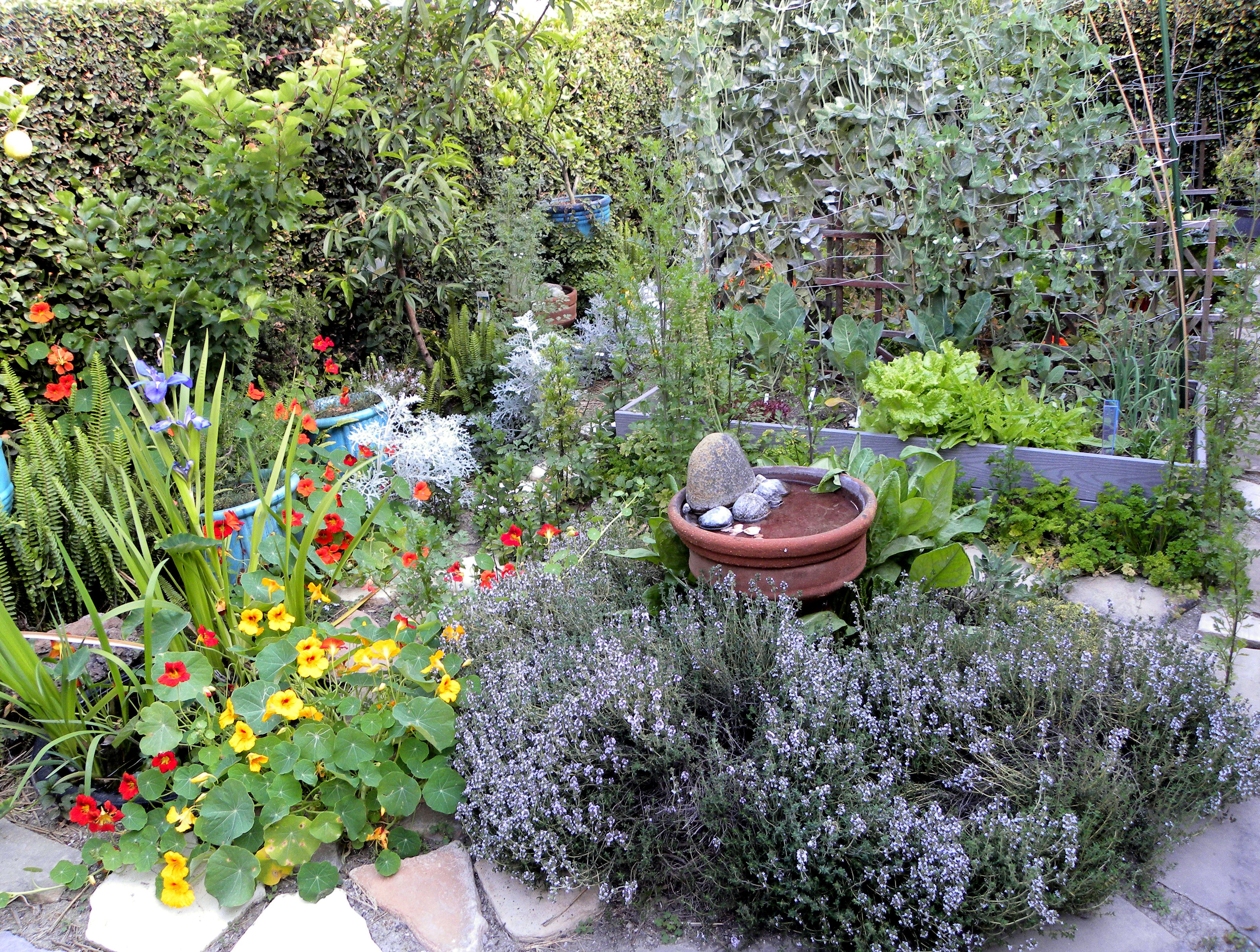 Cool very attractive design herb garden with yellow red for Vegetable herb garden design