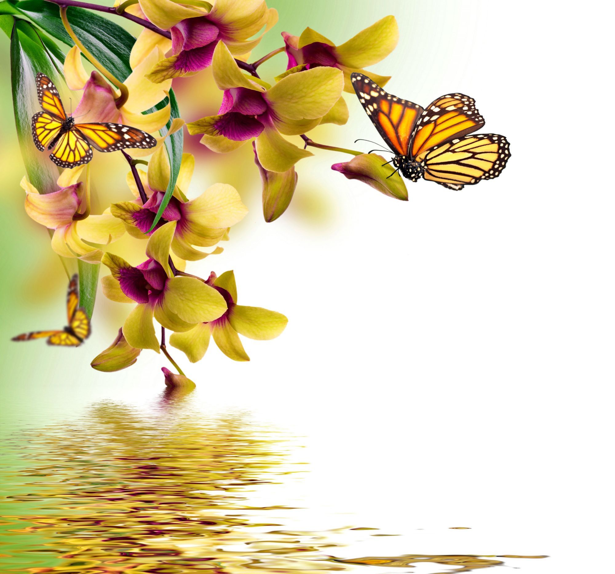 Beautiful Butterflies Sitting On Orchid Flowers By Hamid Raza Buy Posters Frames Canvas Digital Art Prints Orchids Beautiful Butterflies Floral Background