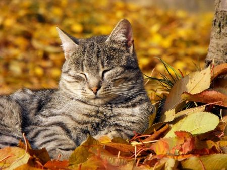 Pin By Renate Sperlich On Autumn Cats Fall Cats Pets Cats