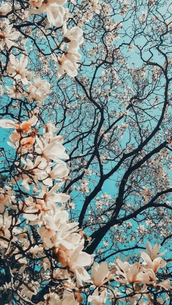 صور خلفيات جديدة 2020 تطبيق رفيق Spring Wallpaper Flower Phone Wallpaper Backgrounds Phone Wallpapers