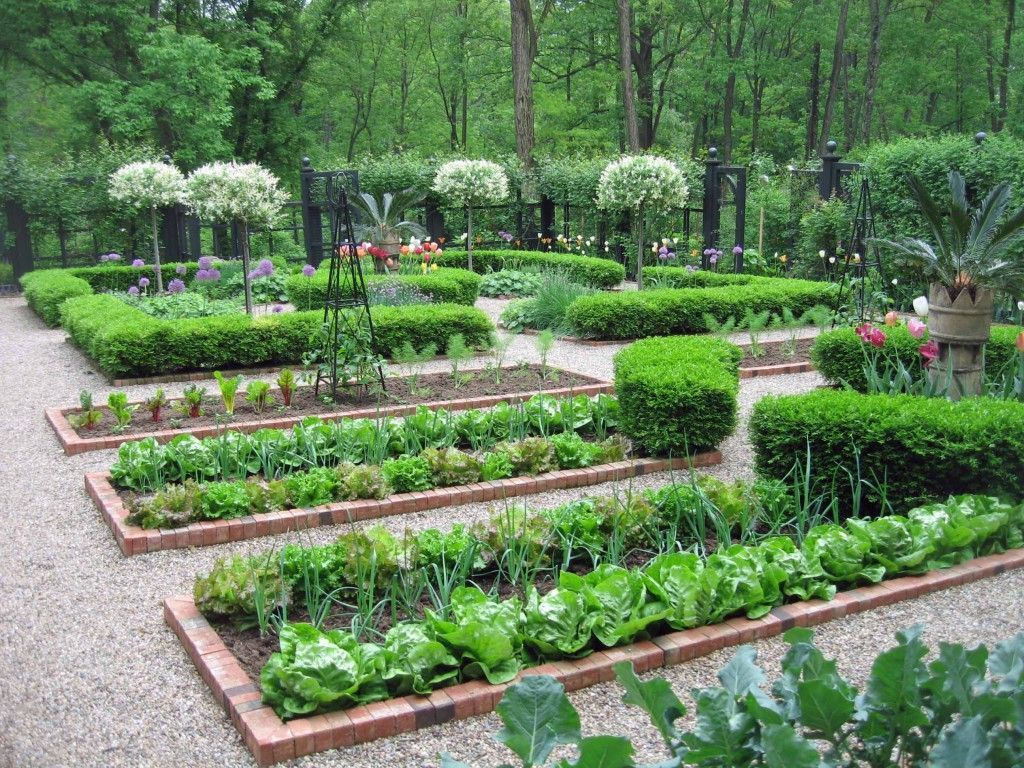 Vegetable gardens. lined with bricks. stone - gravel paths ...