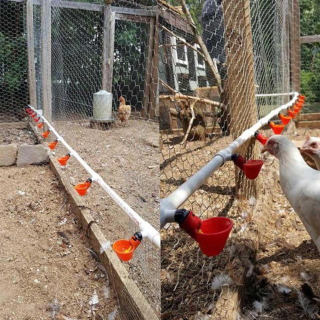 Poultry Water Drinking Cups Plastic Poultry Chickens Hen Birds Automatic Drinker
