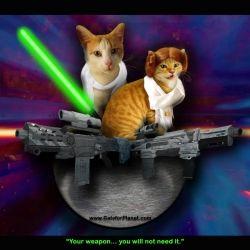 Star Wars Jedi Cats