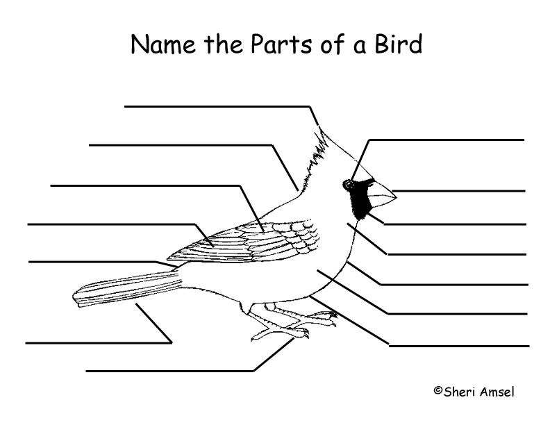Label the Parts of a Bird | bird lessons | Pinterest | Bird, Nature ...