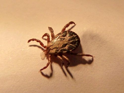 How To Use Lime To Kill Ticks Homesteading The Homestead