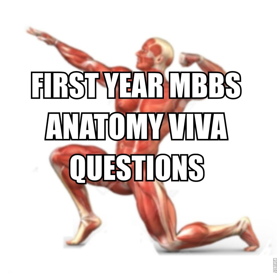 1st Year MBBS Anatomy Viva Questions | Pdf download | Pinterest ...