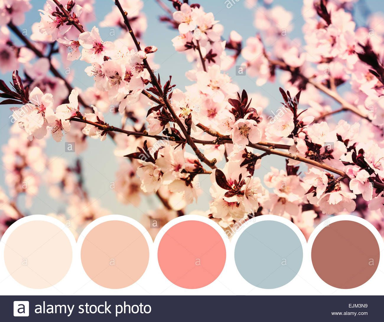 Download This Stock Image Color Palette Of Spring Cherry Tree Flowers Ejm3n9 From Alamy S Library Of Millions Of Hi Color Palette Color Vibe Japanese Colors