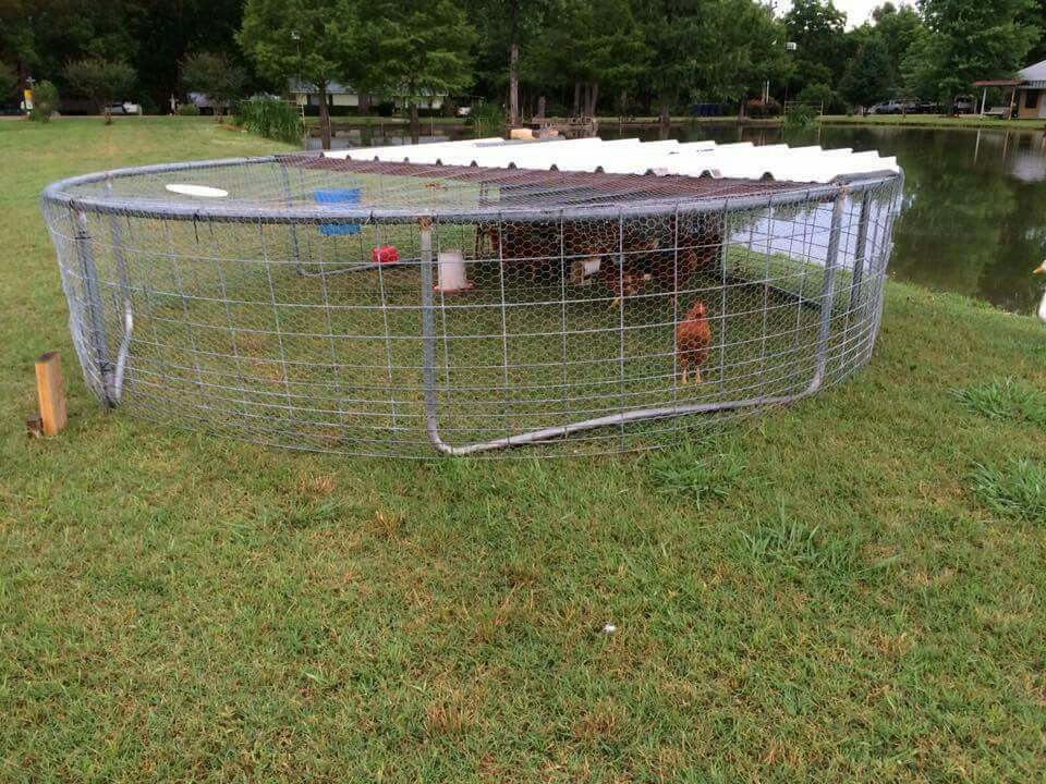 Create chicken coop from an old trampoline frame for Moving chicken coop plans