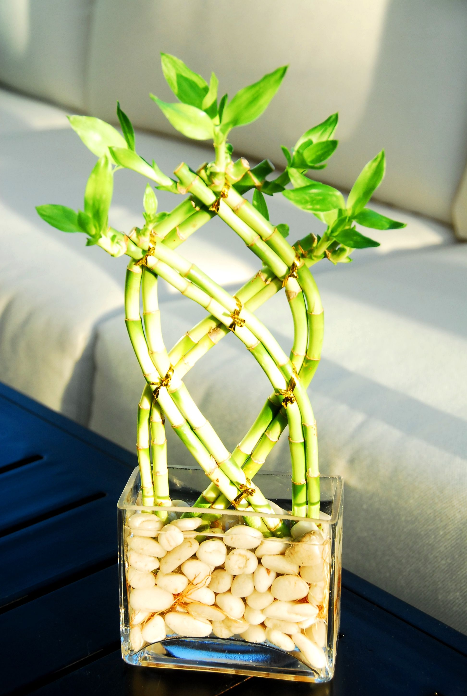 Decoracion Bambu Interiores Pin De Plant Decor En Lucky Bamboo Arrangements