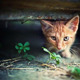 kittennn