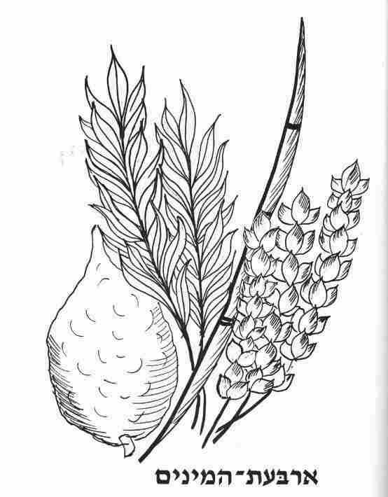 Coloring page for Sukkot Kids