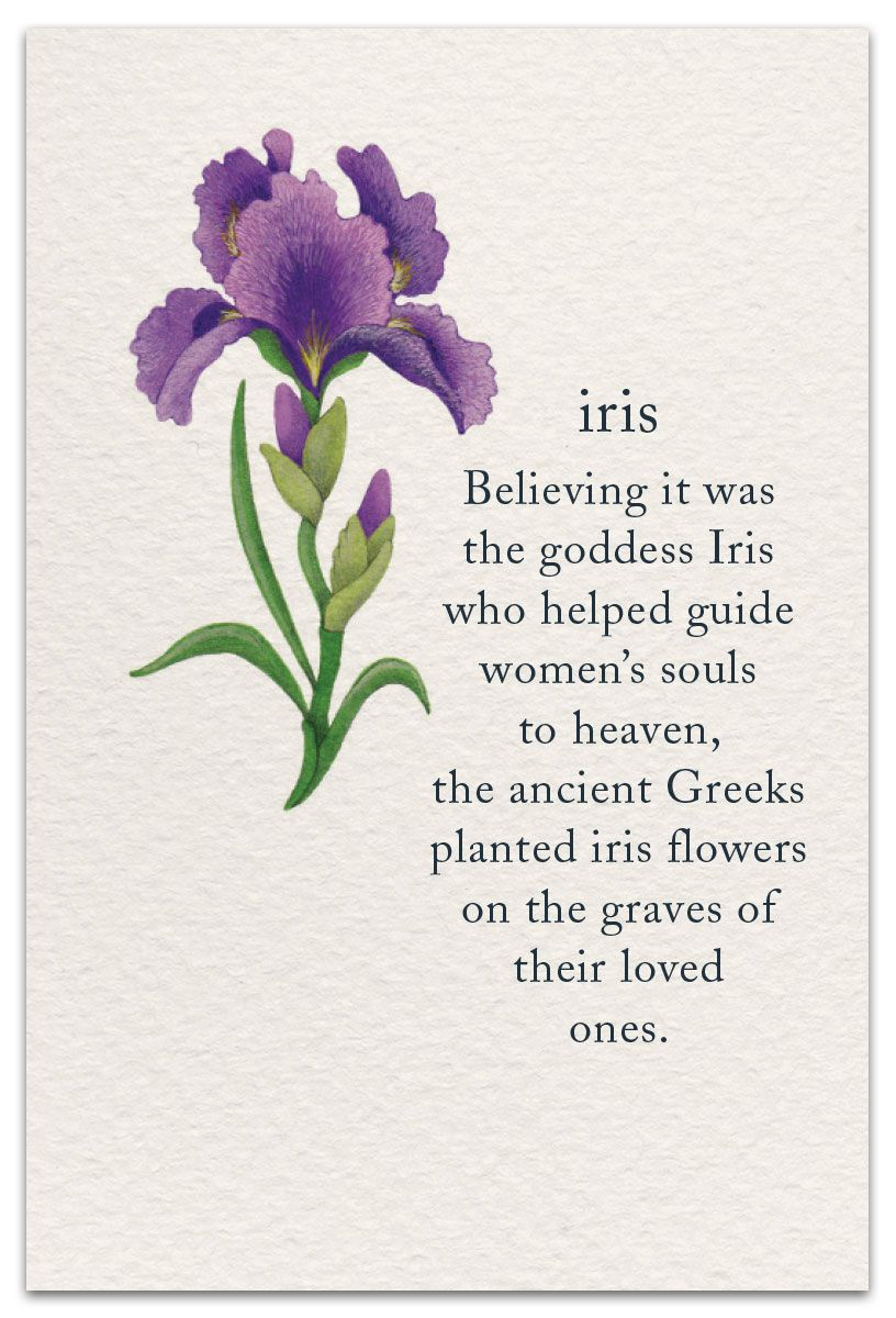 Iris Condolence Card Cardthartic Com Flower Meanings Flower Quotes Symbols And Meanings