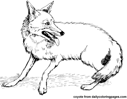 texas coyote animal coloring pagespng - Coyote Coloring Page