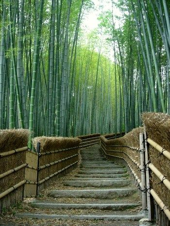 Adashino Nenbutsuji, Kyoto, Japan. the most beutifull place i have been.