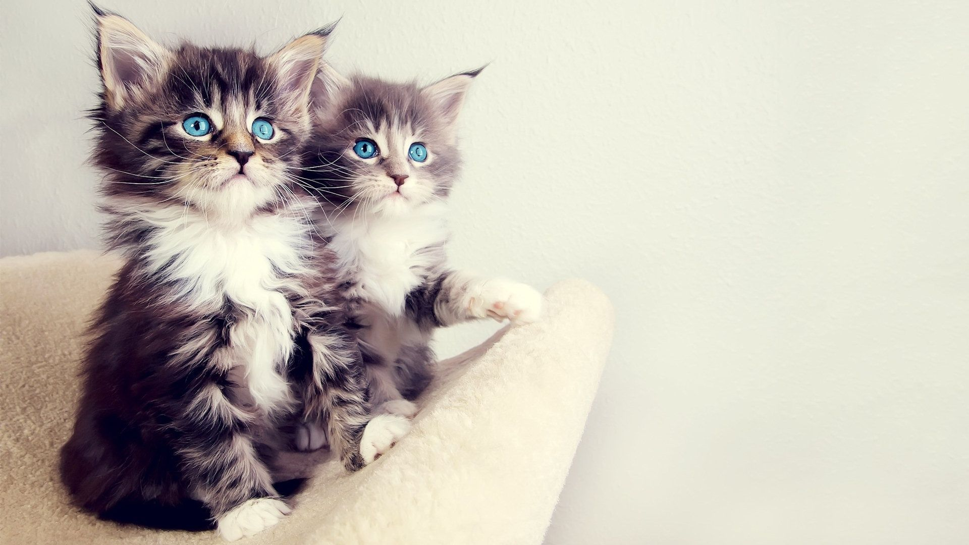 Kitten Wallpapers Background Free Download Kittens Cutest Baby