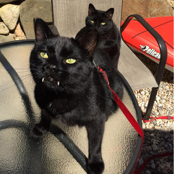 Monk and Bean Are 2 Black Cats Who Rescued Their Human