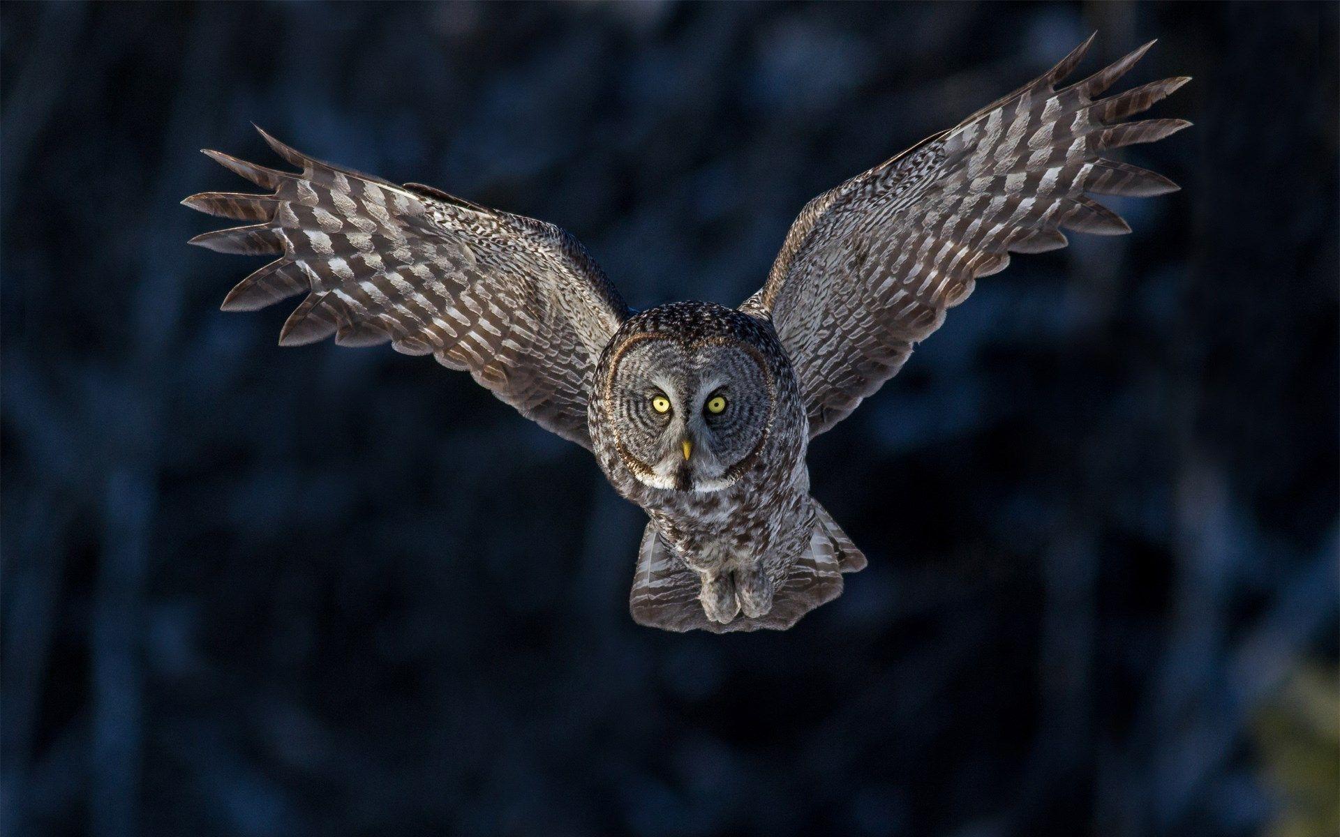 Bird Owl Flying Wings Hd Wallpaper Jpg 1920 1200 Owl Wallpaper Beautiful Owl Bird
