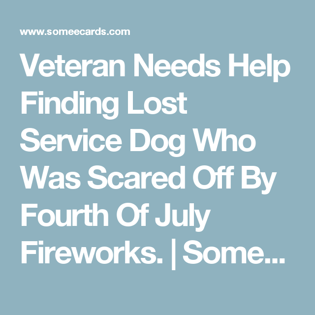Veteran Needs Help Finding Lost Service Dog Who Was Scared Off By Fourth Of July Fireworks. | Someecards Friends