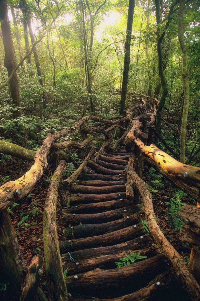 Best Natural Wood Stairs Ascending Into A Forest This Would Be 400 x 300