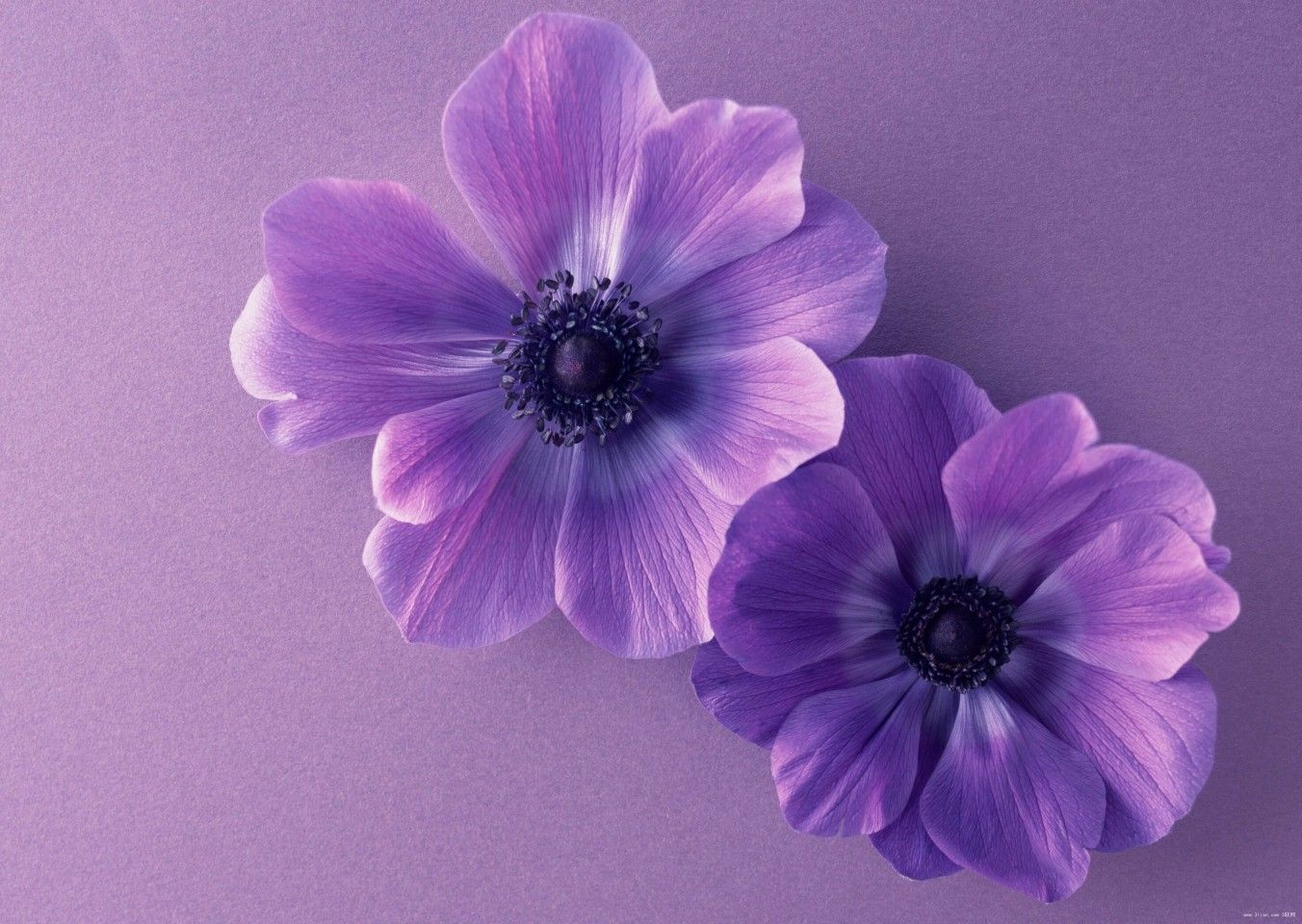 Pin by therese zabrinas on purple pinterest purple flowers and