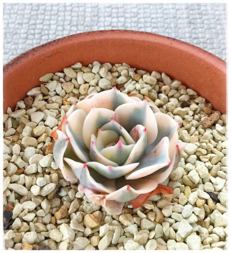 Bellesplants plantas decorativas pinterest for Plantas decorativas hidroponicas